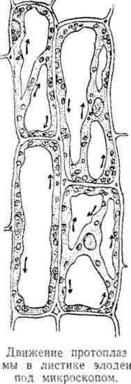 Клеточек составляющих тело растения
