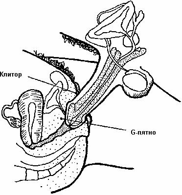 видео из внутри проникновения члена во влагалище правая половина тела
