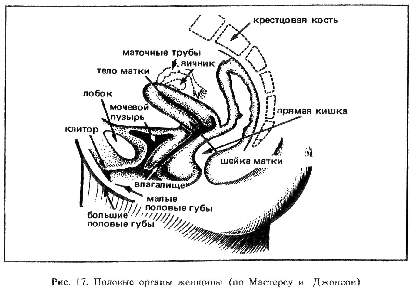 Схема фрикций в вагине 15 фотография