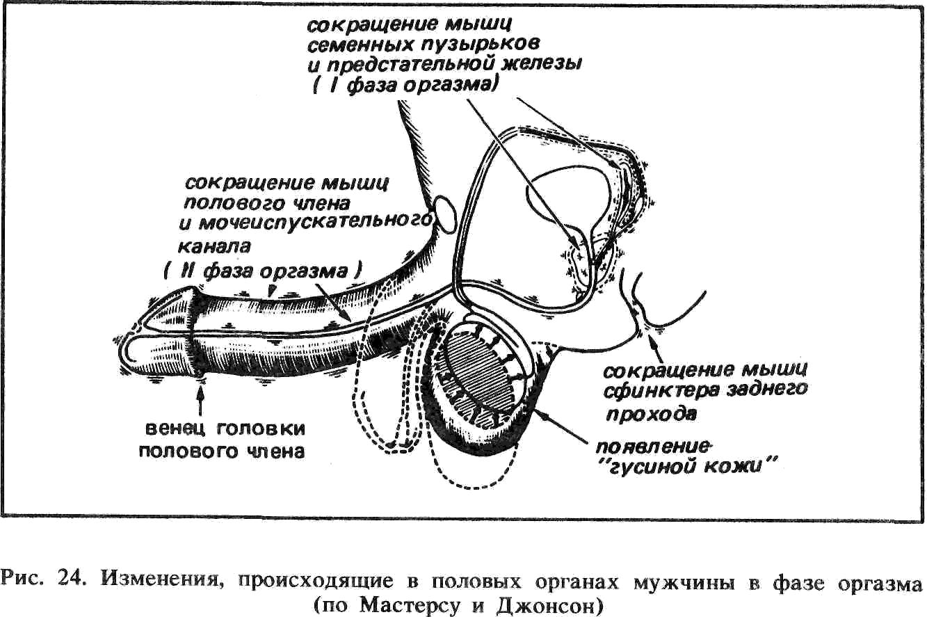 Схема фрикций в вагине 13 фотография