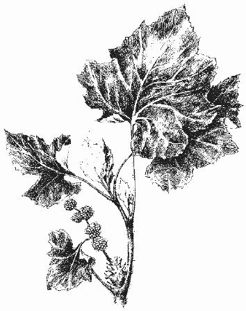 сорные растения реферат