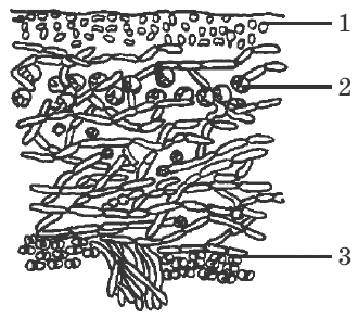 какой организм называют основным хозяином паразита