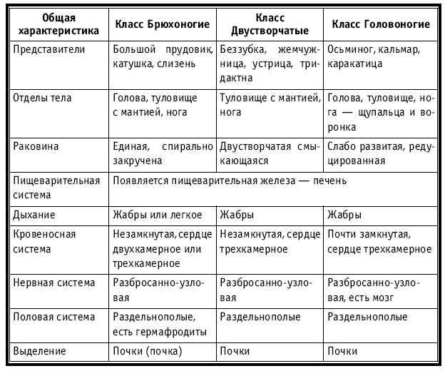 Характеристика и описание витаминов » IronZen
