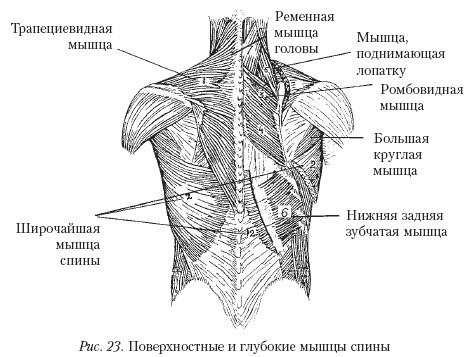 Тем же, кто страдает остеохондрозом позвоночника, лечебная гимнастика для поясничного отдела позвоночника –