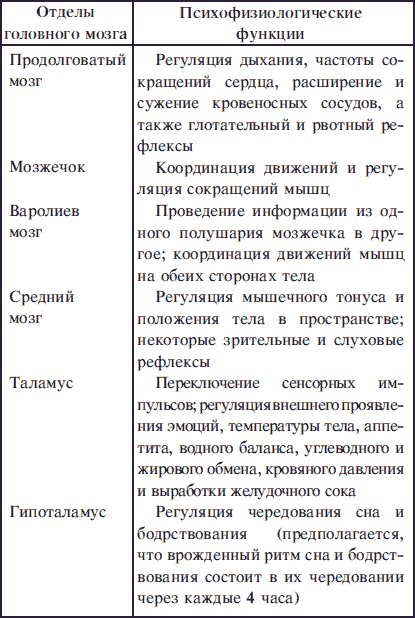 настолько центры мозга и их функции в таблице Новосибирская область