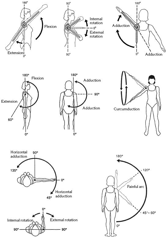 Угломер для определения подвижности суставов прямой атлантоосевой сустав является