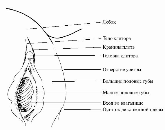 chuvstvitelnaya-chast-klitora