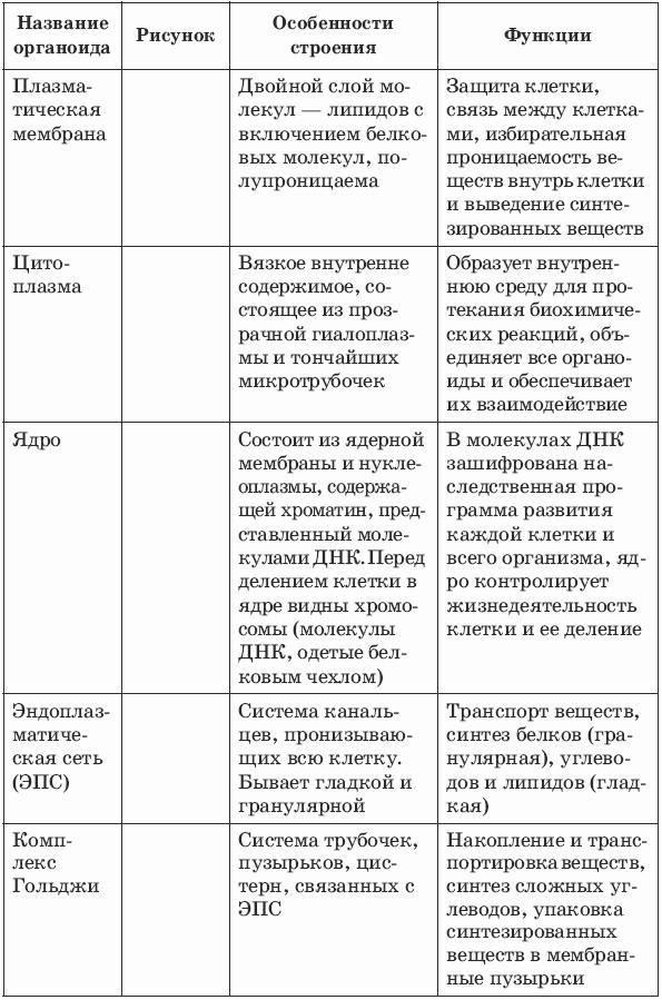 12 схема химический клетки состав