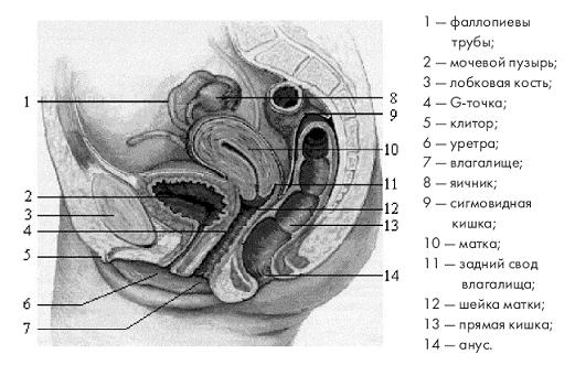 kak-dostich-struynogo-organizma-samoy