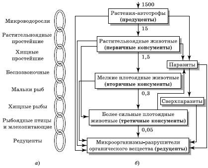 Пищевые цепи биоценоза по Н.