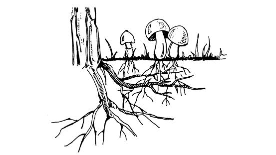 Расчет соединения деревянные