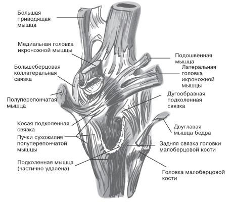 картинка тромб на щиколотке