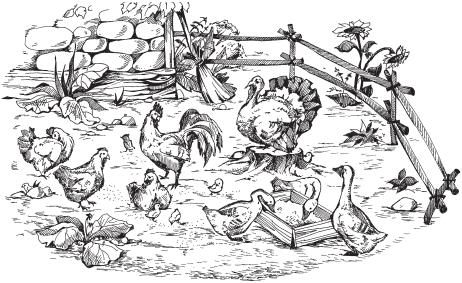 Виды и породы