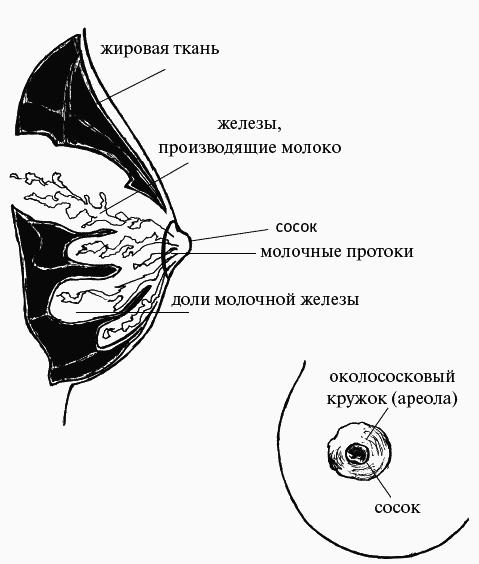 odin-sosok-stal-bolshe-drugogo