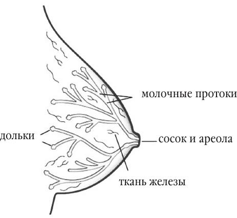Схема системы молочных
