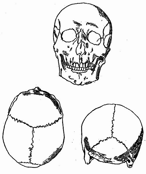Череп арийский картинка три раннеспелых