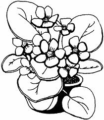 Раскраска комнатное растение фиалка